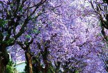 Árboles de jardín floridos