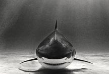 Photography - Marine Life