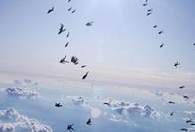 skydivera