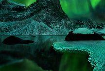 Purple and Green / by Sandra DeeVil