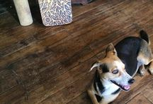 Dog Days Around Cafe