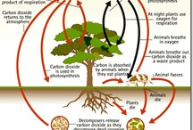Middle School Biology: (Photosynthesis) / Board on how photosynthesis occurs in everyday life and the structure/components of photosynthesis, such as chlorophyll and chloroplasts.