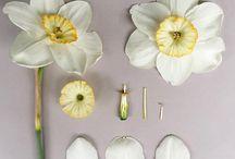 Разбор цветов