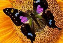 Buttemerflies