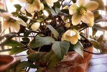 Flowers in the City / Flowers and plants on a balcony