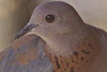 Outras aves de São Tomé e Príncipe