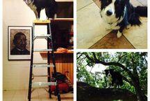 Tudi Our Super Dog <3 / the adventures of Tudi the clinic dog