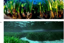 Science Project - Posidonia