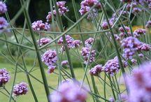 IJLA - Herbaceous Borders / Landscape Architecture Landscape Design Garden Design