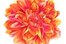 Color - Orange & Pink