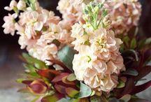 Floral Life / by Ellie Monson
