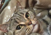 Sárinka je kočka, cat