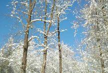 Weißt Du noch? Wann wird's mal wieder richtig Winter? / Herzliche Grüße zum Weihnachtsfest und frohe Feiertage sowie einen guten Start ins neue Jahr möchten wir all unseren Gästen und Freunden unseres Ferienhauses wünschen. Da es dieses Jahr wohl nichts mit weißen Weihnachten werden wird, hier ein paar Impressionen aus den letzten Jahren. Bis bald mal wieder! Gabi Rausch www.ferien-im-gebirge.de