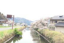 2016年桜 / 2016年年奈良三輪、大阪城夜桜、造幣局夜桜、余呉湖桜