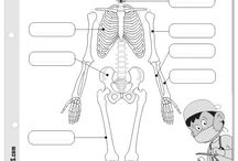 Our systems (Bones)