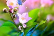 Virágok, lepkék, pillangók