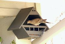 Bird house/feeder