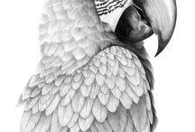 b Birds