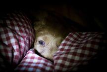 Toilerpuppy goes to sleep...