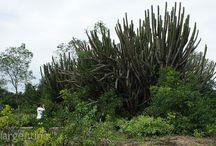Chaco / Paisaje de la Provincia de Chaco...http://www.liveargentina.com/chaco.php