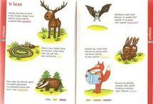 zvířata z lesa
