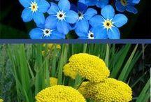colourful perennials