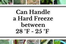 Cool and Warm season plants