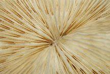 ~Oatmeal, Buttercream, Bone, Parchment / Colors- Off Whites / by FreeKLR NUrF8z