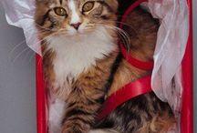 Animals and Christmas wrapping!