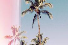 Turquoise / Palmiers / Vacances / Kiff :)