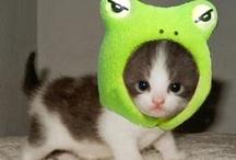 #catloversday