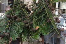 Weihnachtsbaum anders
