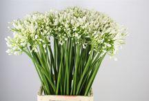 blomster å bruke på underlaget
