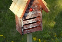 Bird boxes / by Ken Habgood
