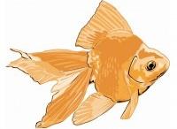Ozark Fisheries Goldfish