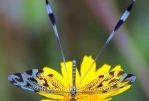 dragonfly ^_^