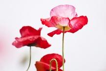 kwiaty inspiracje