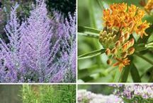 výsadba - SUCHO tolerantní rostliny