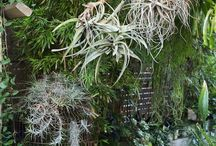 Plants in trees