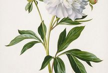 modern botanical