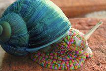 Gastropoda / Snails - Aquatic or Terrestrial / by Emily Weathers
