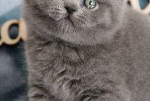 котики-красавчики