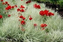 Kesämaa grasses