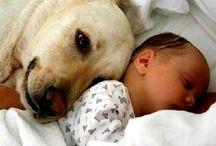 Dogs &babies