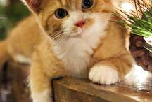 kitty♡