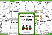Second Grade Plant Cycles / by Stephanie Penney