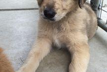 #puppy's