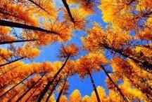 Autumn Foliage... / autumn, foliage / by Pitsit sekaisin
