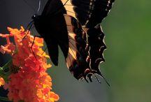 <3utterflies