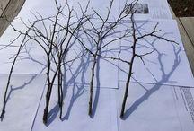 wood / 나무